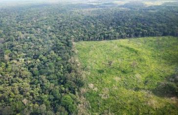 Die Abholzung und Brandrodung im brasilianischen Amazonas geht unvermindert weiter