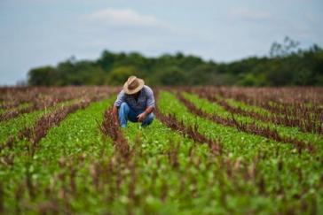 Die Landwirtschaft ist in Kuba einer der zentralen Bereiche, in denen die Produktivität erhöht werden muss