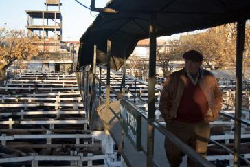 Rindermarkt in Argentinien