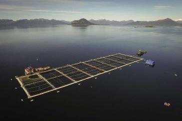 Die Lachszucht im Süden Chiles steht vor einer ökologisch schädlichen Zukunft