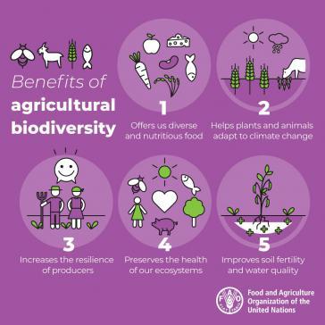 Wie will die FAO die Propagierung von Biodiversität und Agrarökologie und eine Kooperation mit der Pestizidindustrie vereinbaren?