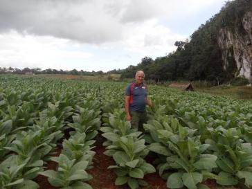 Der Aufschwung der Öko-Landwirtschaft kam 1995 mit der Sonderperiode