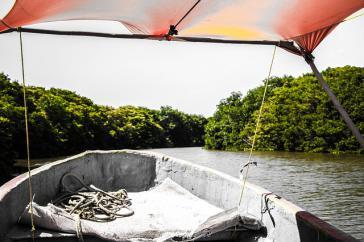Die Mangroven in Veracruz sind eine vielfältige Landschaft, Heimat zahlreicher Flora und Fauna