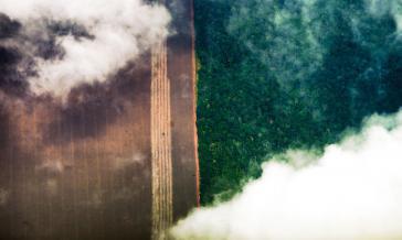 Bolsonaro fordert finanzielle Mittel aus dem Ausland, um illegale Entwaldung in Brasilien zu stoppen