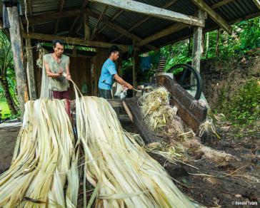 Unter widrigsten Bedingungen ließ der Agrarkonzern Furukawa Abacá anbauen (Symbolfoto)