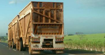 Zuckerrohr auf dem Weg vom Acker in die Zucker- und Ethanol-Raffinerie (Bundesstaat São Paulo)