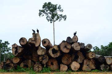 Über die Hälfte des Holzeinschlags entfiel auf den Bundesstaat Mato Grosso