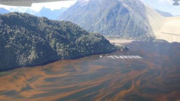 Die Lachsindustrie hat laut Expert:innen einen großen Anteil an der Ausbreitung toxischer Algen
