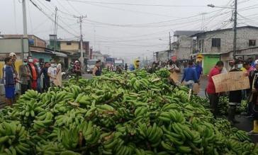 Kleine und mittlere Bananenerzeuger in den Provinzen Los Ríos, El Oro und Guayas legten die Arbeit nieder und forderten die Einhaltung der Mindestpreise für die Vermarktung