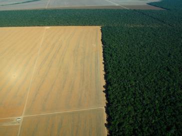 Agrarindustrie – wie hier im brasilianischen Bundesstaat Mato Grosso – ist einer der Haupttreiber der Entwaldung auf dem Kontinent