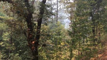 Ziel von illegalen Holzfällern: der Gemeindewald von Jaleaca de Catalán (Guerrero)