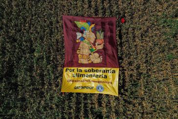 Mexiko verbietet Einsatz von gentechnisch verändertem Mais und Glyphosat bis 2024