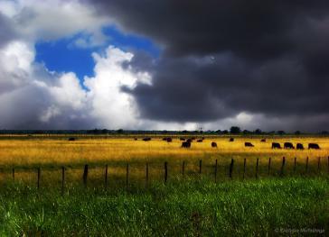 Kurzzeitig ziehen dunkle Wolken über der Exportbranche für Rindfleisch in Argentinien auf