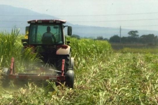 Soll effizienter werden: Kubas Landwirtschaft