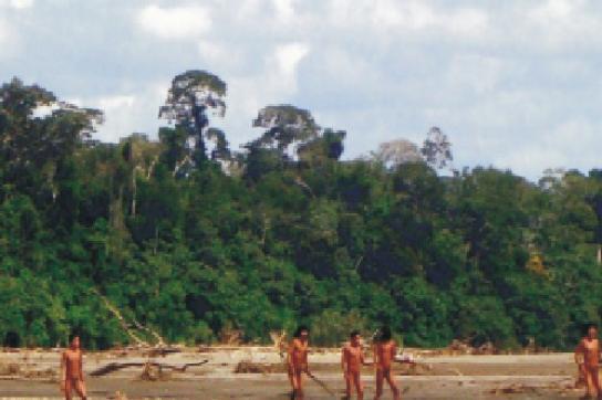 Besonders Indigene drängen auf den Schutz von Wäldern und Wildtieren