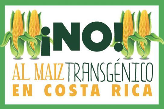 Nein zum gentech Mais in Costa Rica
