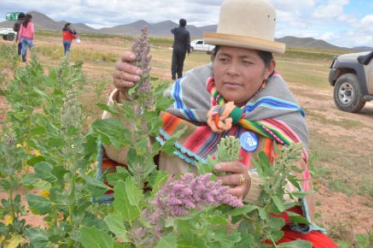 Bolivien präsentiert organische Quinoa-Produkte in Deutschland