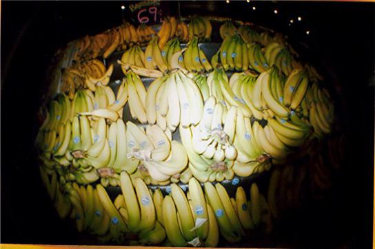 Zu Beginn der 1990er Jahre waren Bananen das Hauptexportprodukt von Kolumbien