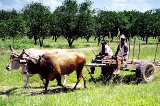 Kuba will Importe verringern